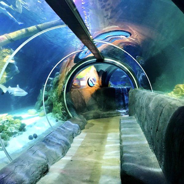 Acrylglas-Tunnel Sea Life Oberhausen