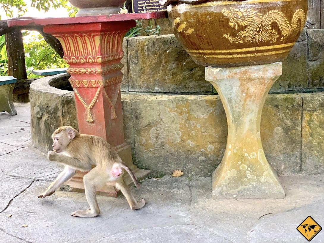 Affe Big Buddha Phuket