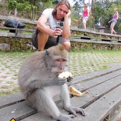Affe mit Banane im Monkey Forest Ubud