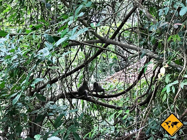 Affen Sendang Gile Tiu Kelep Wasserfälle Lombok