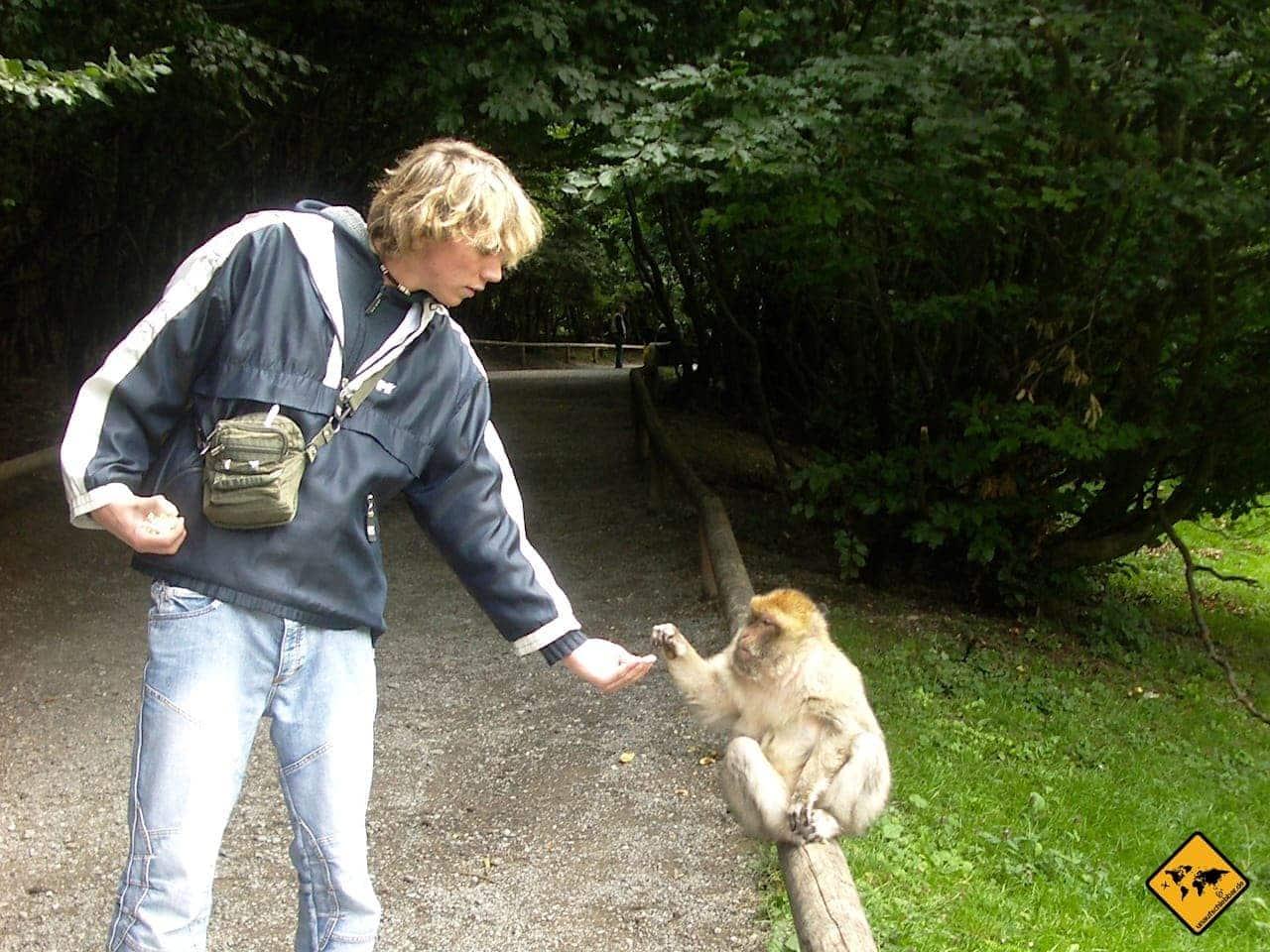 Affen füttern Popcorn