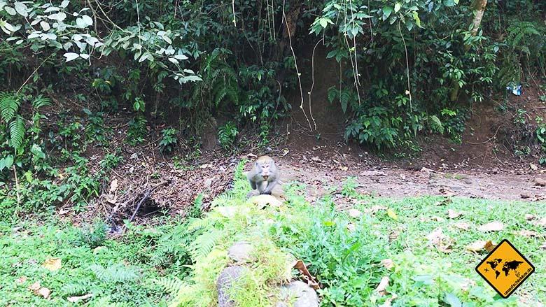 Affenangriff Geopark Rinjani