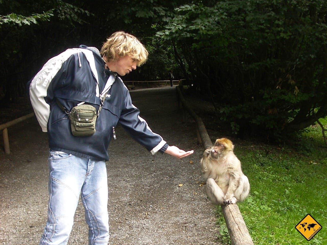 Affenberg Salem Affen füttern