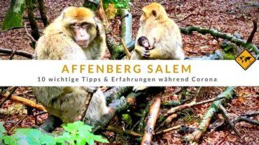 Affenberg Salem – 10 wichtige Tipps & Erfahrungen während Corona