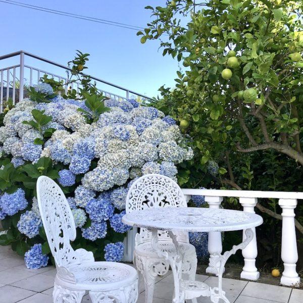 AirBnB Teneriffa Icod de los Vinos Garten Blumen