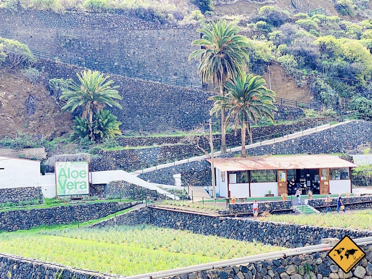 Aloe Vera Farm Hermigua