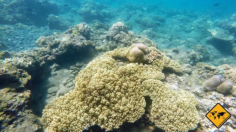 Amed Bali Indonesien Schnorcheln Korallen