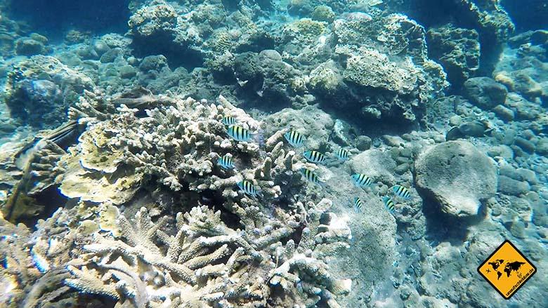 Amed Bali Schnorcheln Korallen Fische