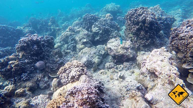 Amed Bali Schnorcheln Tauchen Korallen