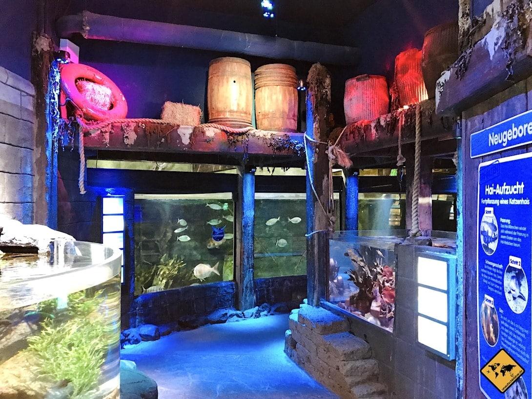 Aquarien Becken Sea Life