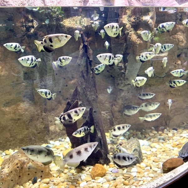 Aquarium Dubai Fische