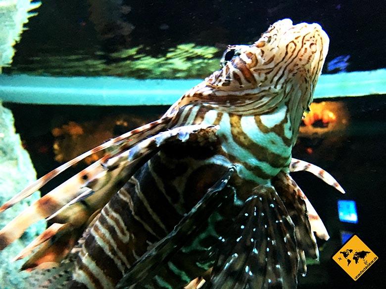 Aquarium Pattaya Tiefseefisch