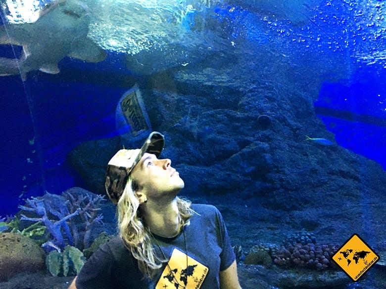 Aquarium Pattaya Tunnel