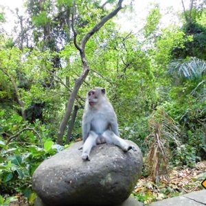 Auch Affen brauchen auf einer Bali Rundreise mal eine Pause