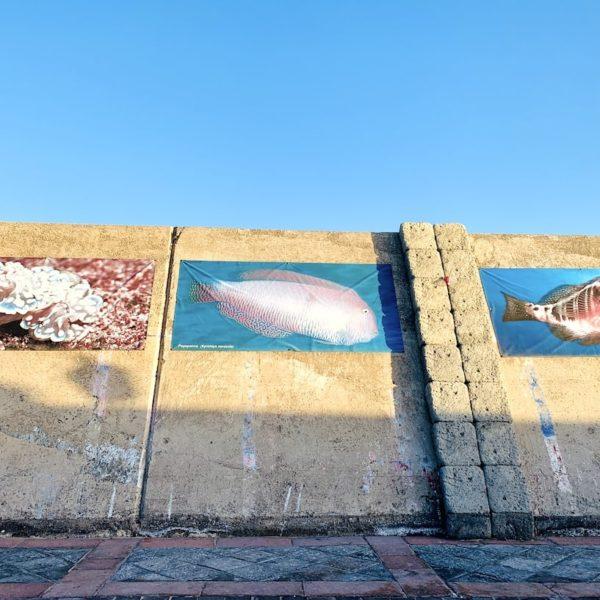 Ausstellung Tiere Ozean Teneriffa