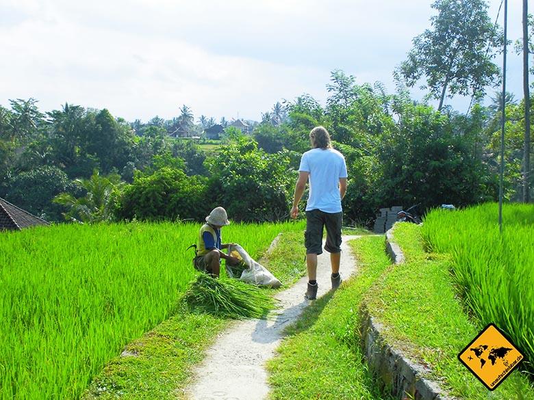 Backpacker Schuhe Bali Reisfeld Hanwag Herren Alta Bunion Gtx Trekking- und Wanderstiefel