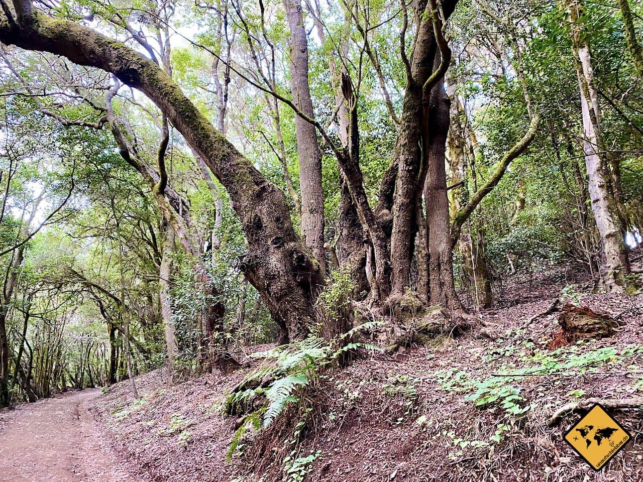 Bäume Wanderweg Las Creces