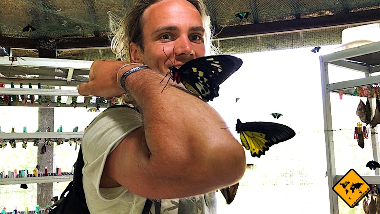 Bali Aktivitäten Butterfly Park