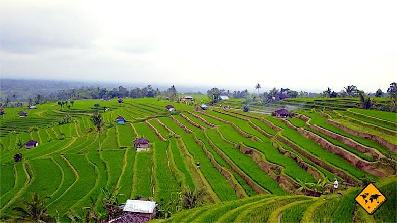 Bali Ausflüge Jatiluwih Reisterrassen