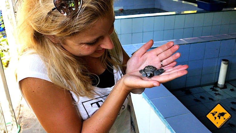 Bali Ausflüge Turtle Conservation and Education Center Serangan