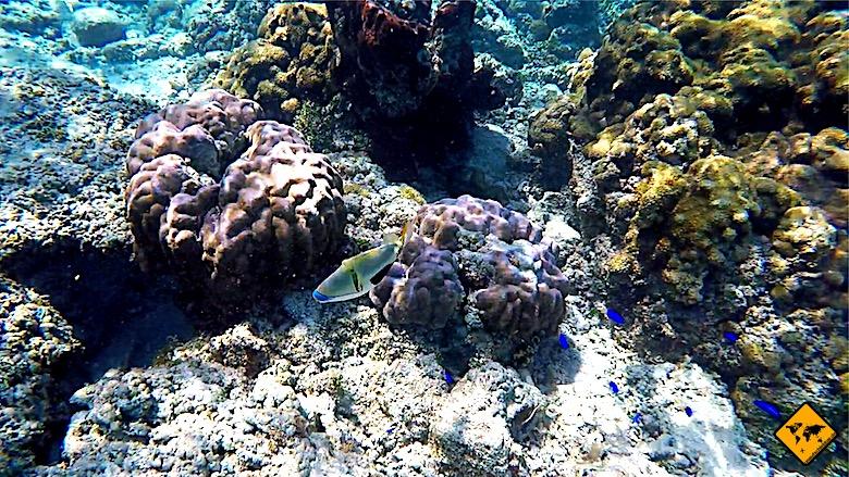 Bali Backpacking schnorcheln Gili Inseln