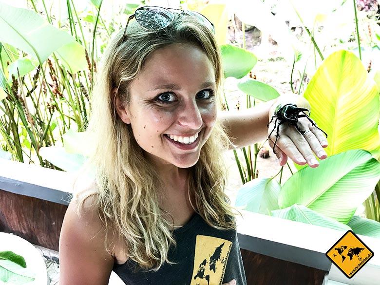 Bali Butterfly Park Hirschkäfer