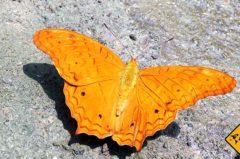 Bali Butterfly Park – Von schönen Schmetterlingen und Riesen-Käfern