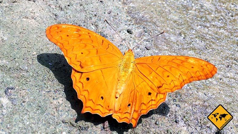 Bali Butterfly Park orange
