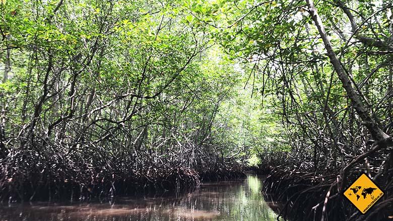 Bali Lombok Gili Rundreise Mangrovenwald Nusa Lembongan