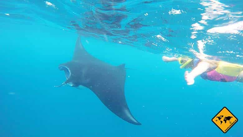Bali Manta Point schwimmen Riesenmanta