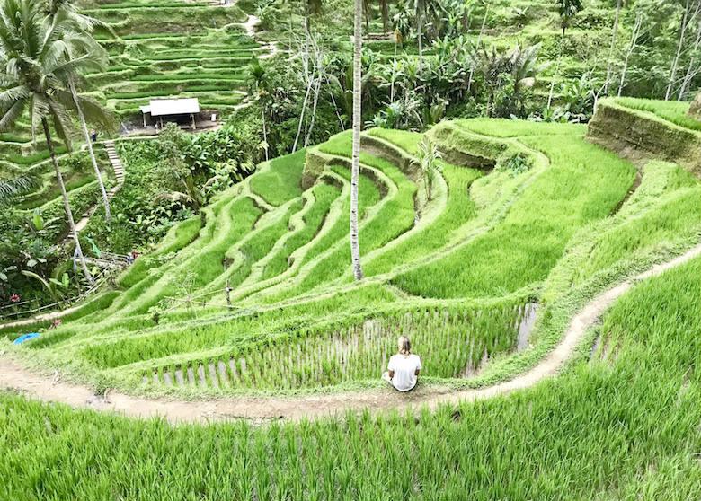 Bali Regenzeit grüne Reisterrassen