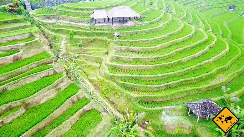 Bali Reisetipps Jatiluwih Reisterrassen