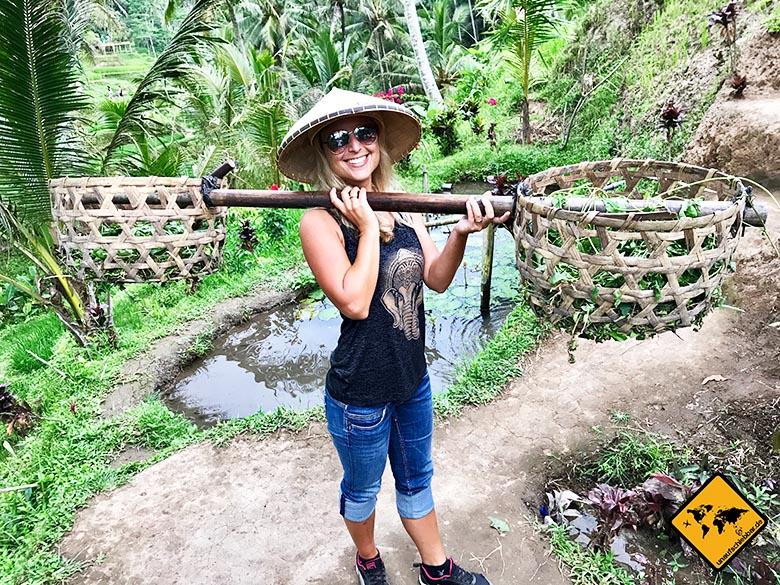 Bali Reisetipps Ubud Reisterrassen