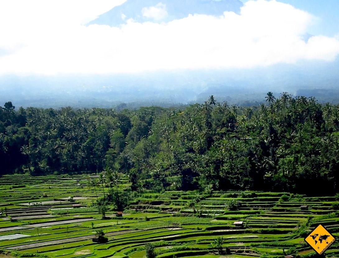 Die Bali Reisfelder von Sidemen