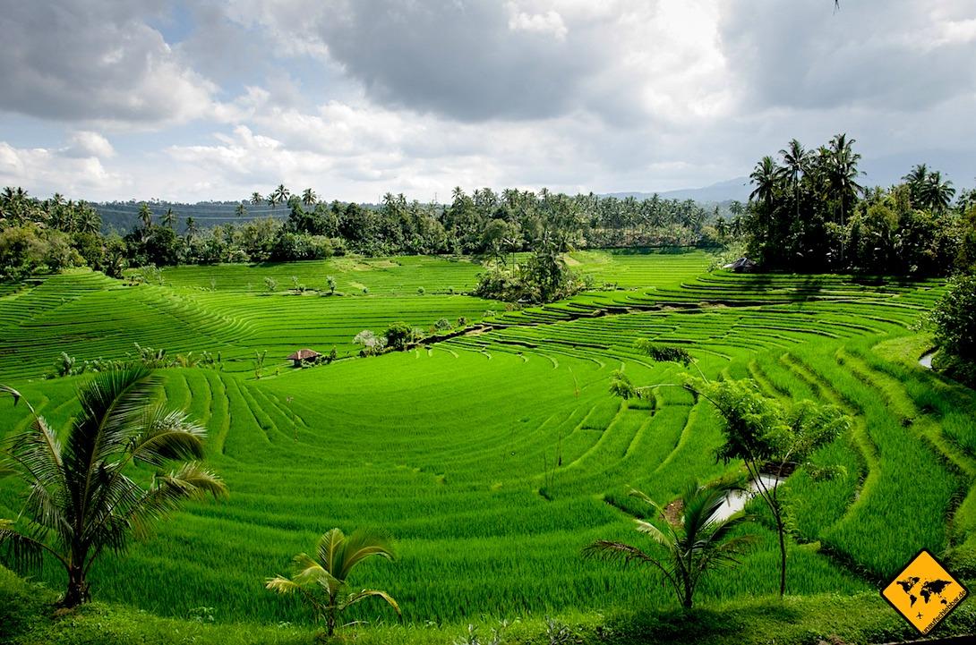 Bali Reisfelder von Tirta Gangga
