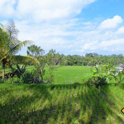 Bali Reisfelder Ubud