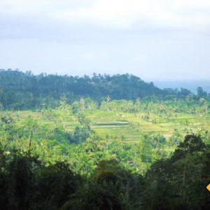 Bali Reisterassen mit Weitblick
