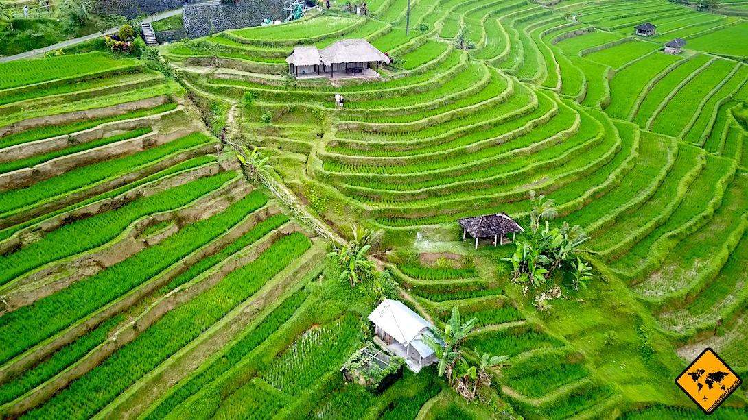 Die Jatiluwih Reisterrassen auf Bali
