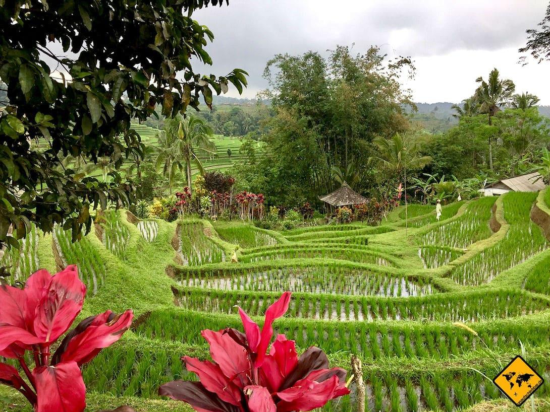 Bali Reisterrassen von Munduk