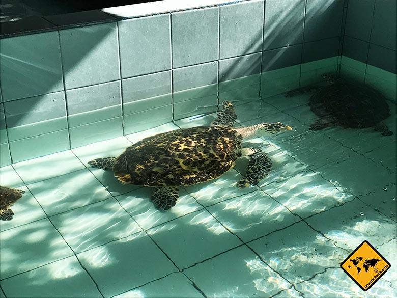 Bali Schildkröten Schutzstation Becken