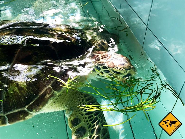 Bali Schildkröten Schutzstation Futter