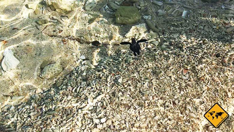 Bali Schildkröten Schutzstation Meer