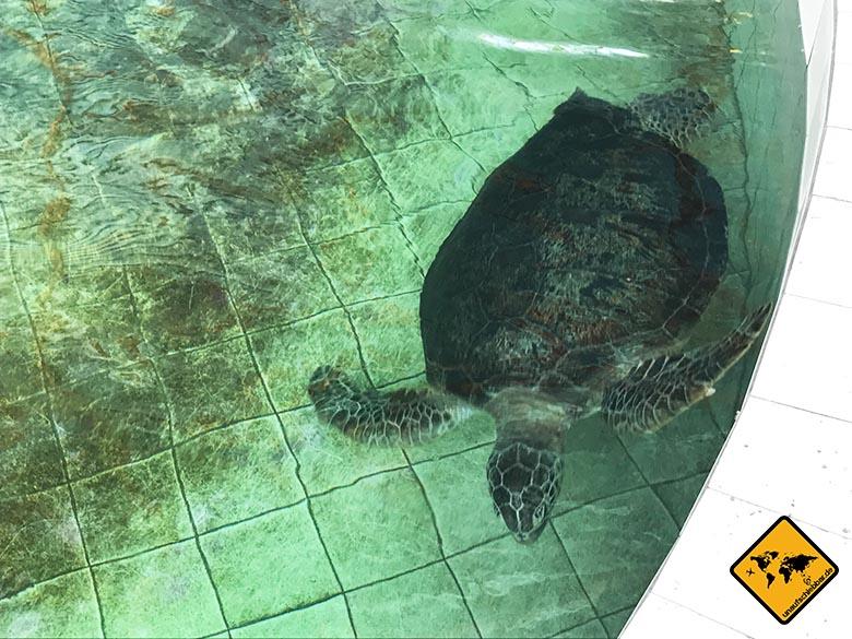 Bali Schildkröten Schutzstation Pflege