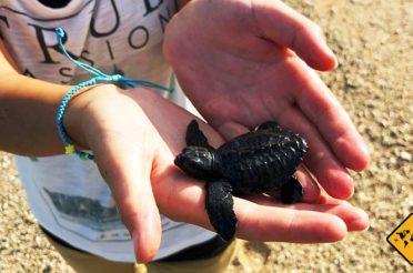 Unser Highlight: Die Bali Schildkröten Schutzstation in Serangan
