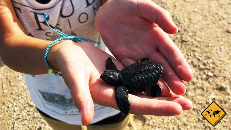 Bali Schildkröten Schutzstation freilassen Meer