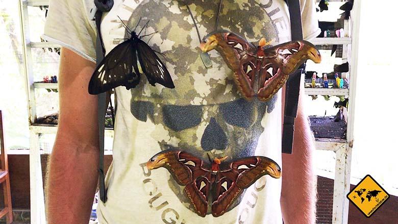 Bali Schmetterlinge