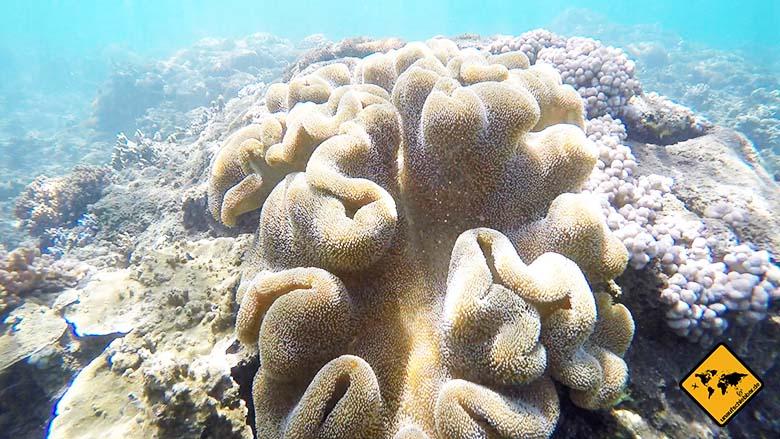 Bali Sehenswürdigkeiten top 10 Amed Koralle