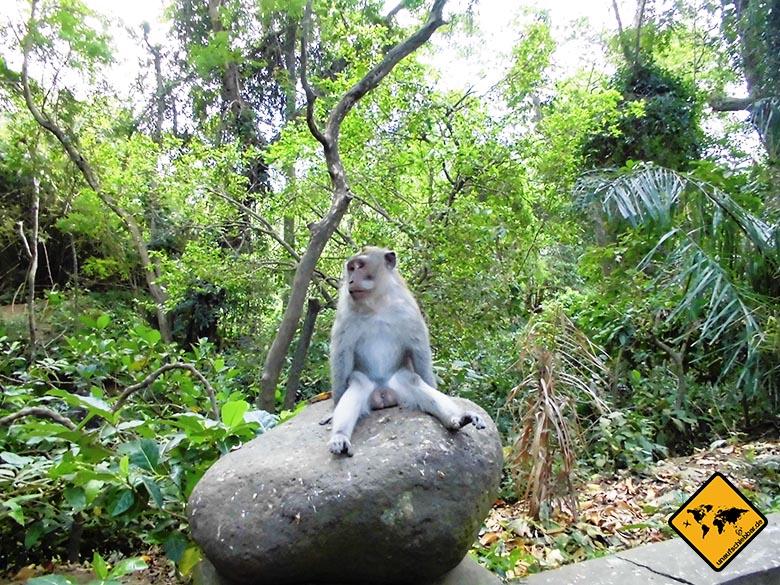 Bali Sehenswürdigkeiten top 10 Monkey Forest Ubud Affe Langeweile