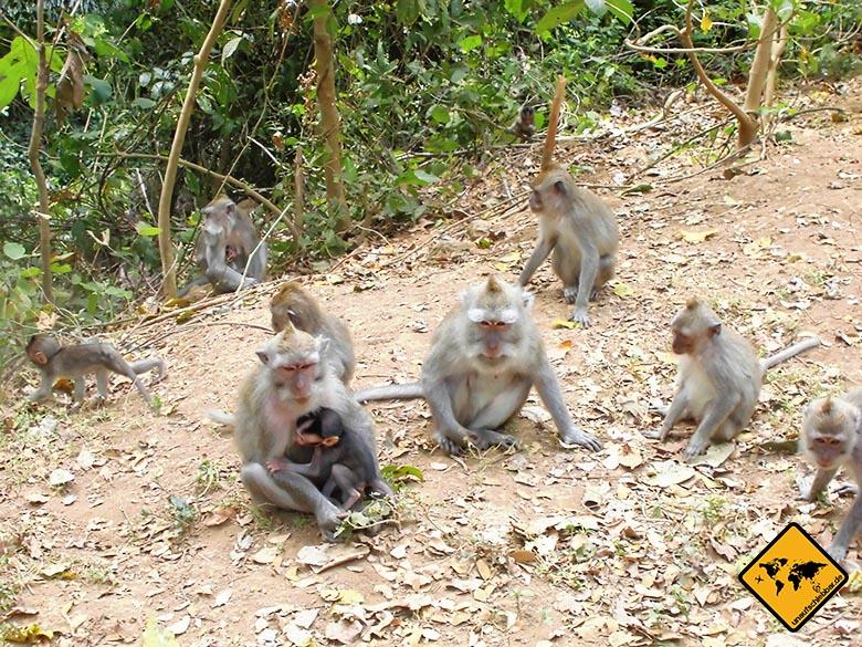 Bali Sehenswürdigkeiten top 10 Monkey Forest Ubud Gruppe Affen