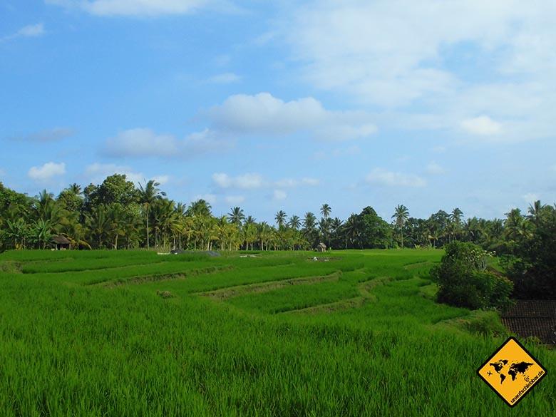 Bali Sehenswürdigkeiten top 10 Ubud Reisfelder 3